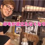 【速報】HIKAKIN、2匹目の猫を購入